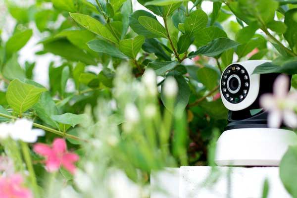 دوربین مدار بسته برای گیاهان