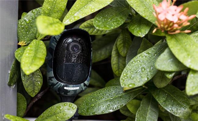 نکاتی که در مورد نصب دوربین های مدار بسته برای گیاهان باید بدانید